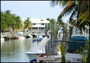 Waterfront homes in Crystal River Florida